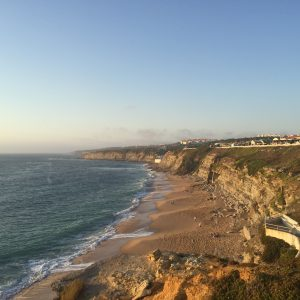 Erizo de Mar Ouriço do Mar